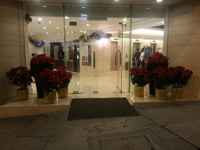 Poinsettias outside the Cosmopolitan Hotel, Hong Kong