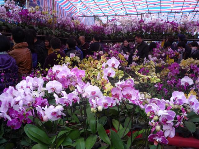 Orchids at Victoria Park flower market