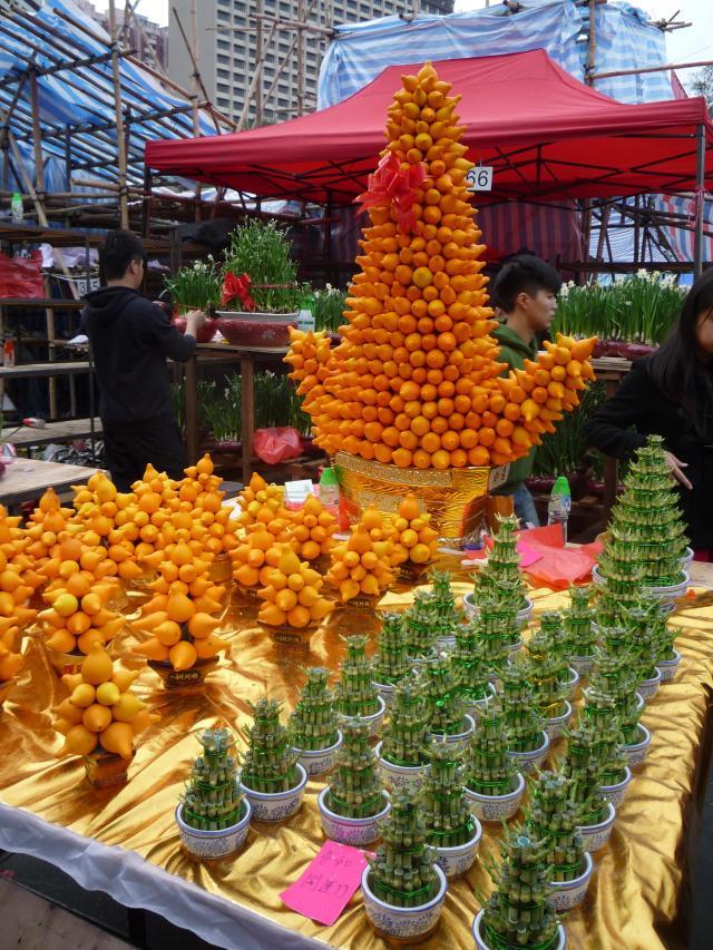 Solanum mammosum display