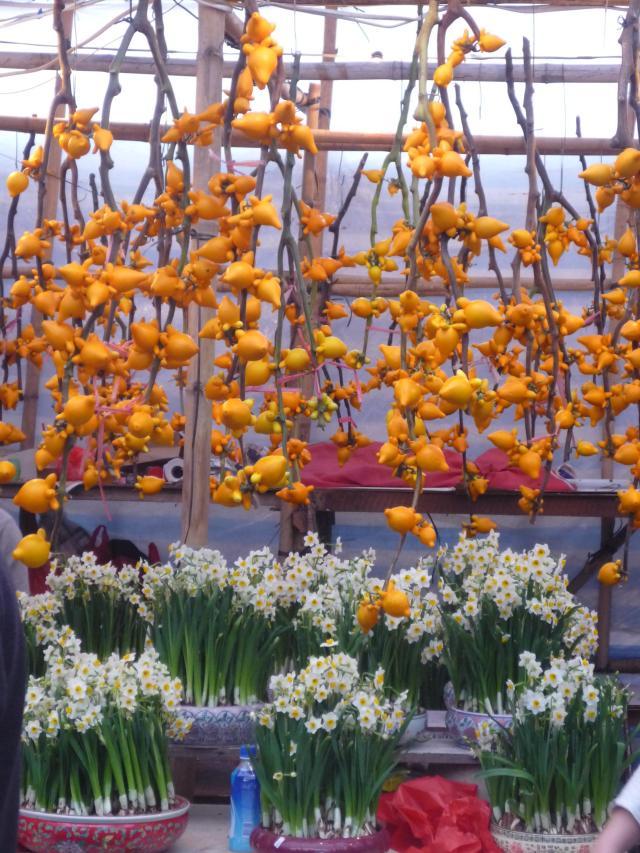 Solanum mammosum Chinese New Year decorations