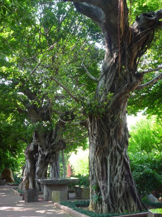 Nan Lian Gardens banyan trees