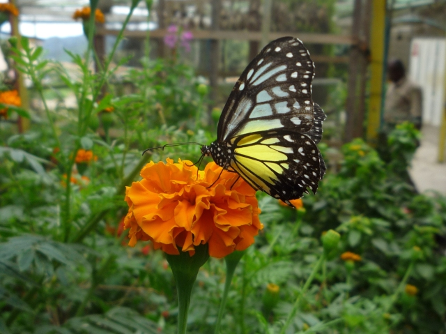 Butterfly farm Cameron Highlands