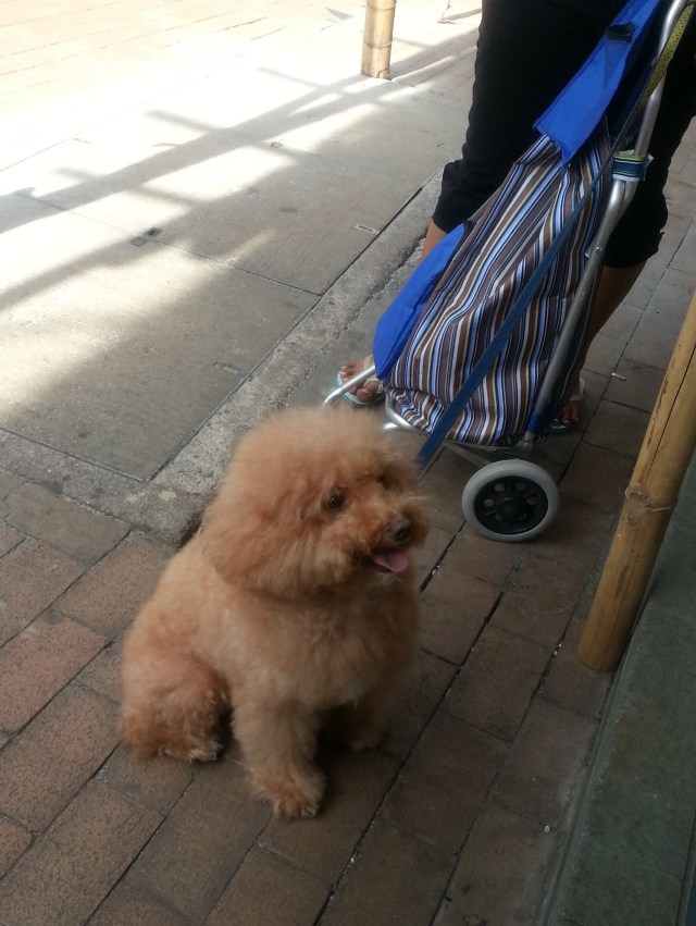 150526 Candid Hong Kong cute dog