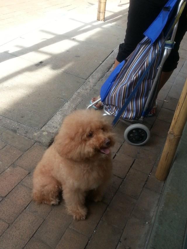 150526 Candid Hong Kong cute dog