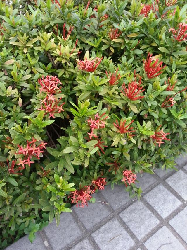 hong_kong_flowers_clusters