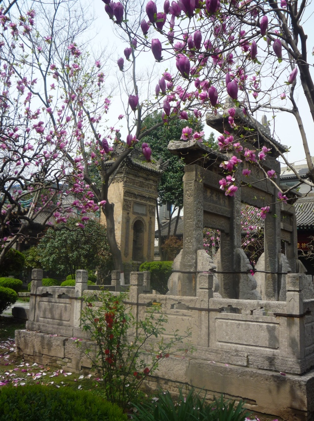 Xian grand mosque blossom