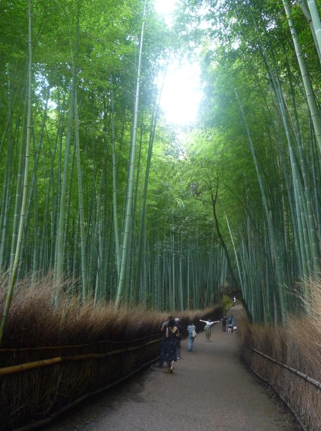 Arishayama Bamboo Grove  Kyoto - The Little Koo Blog