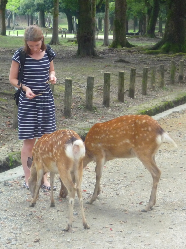 Feeding the deer at Nara-koen - The Little Koo Blog