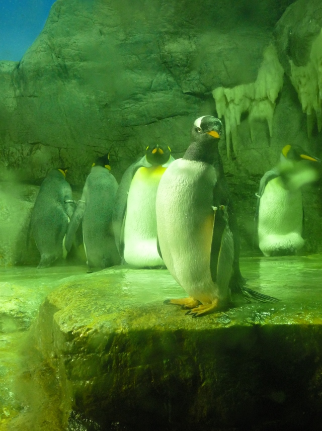 Penguins at Osaka Aquarium - The Little Koo Blog