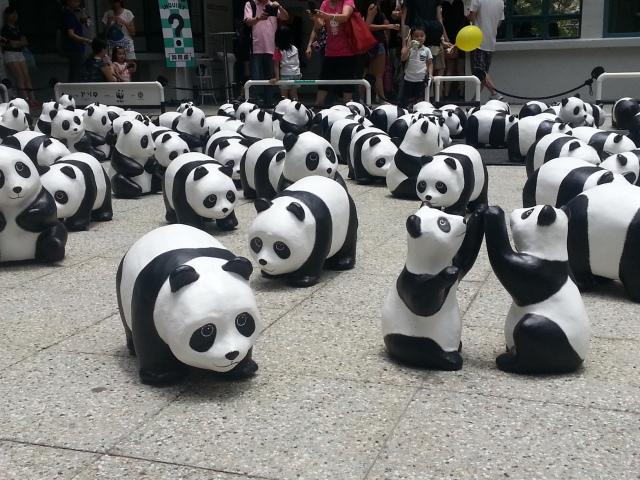 160405 Candid Hong Kong invasion of the pandas