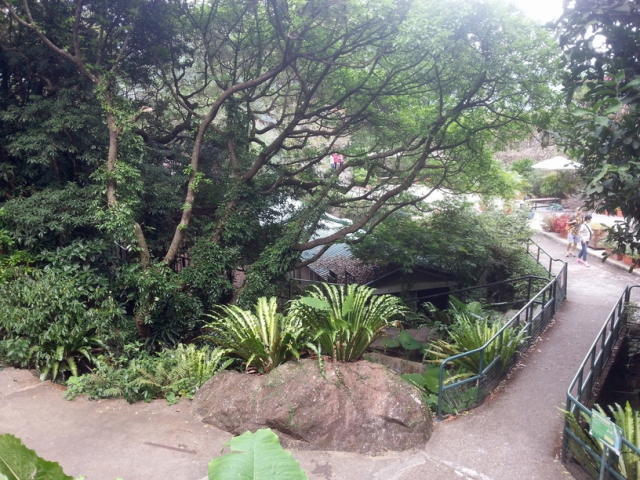 Kadoorie Farm pathways