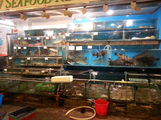 160614 Candid Hong Kong Rainbow Restaurant fish display